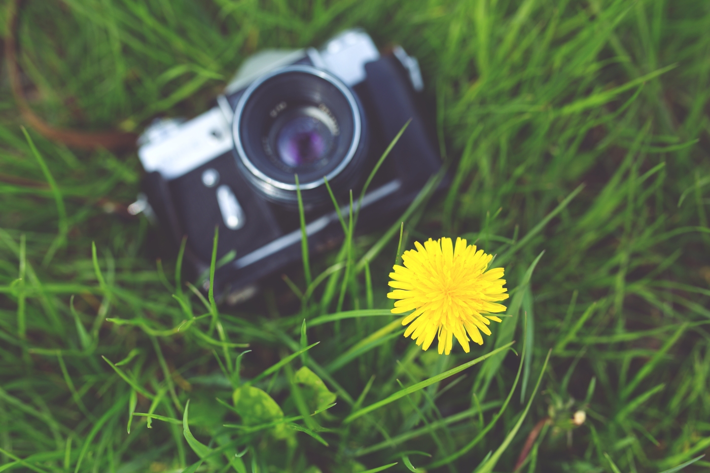 Camera on grass