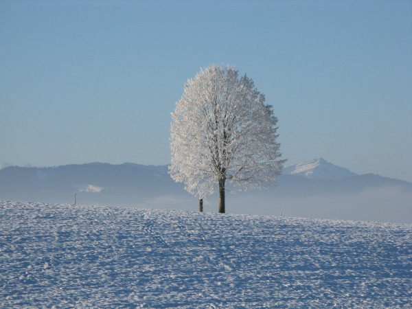 Background for Winter Sale - Tree against Snow